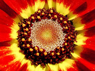 Macroflora